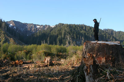 A forest activist stands on the stump of a giant fir tree (more than 500 years old) logged in the Chugach National Forest, Al...