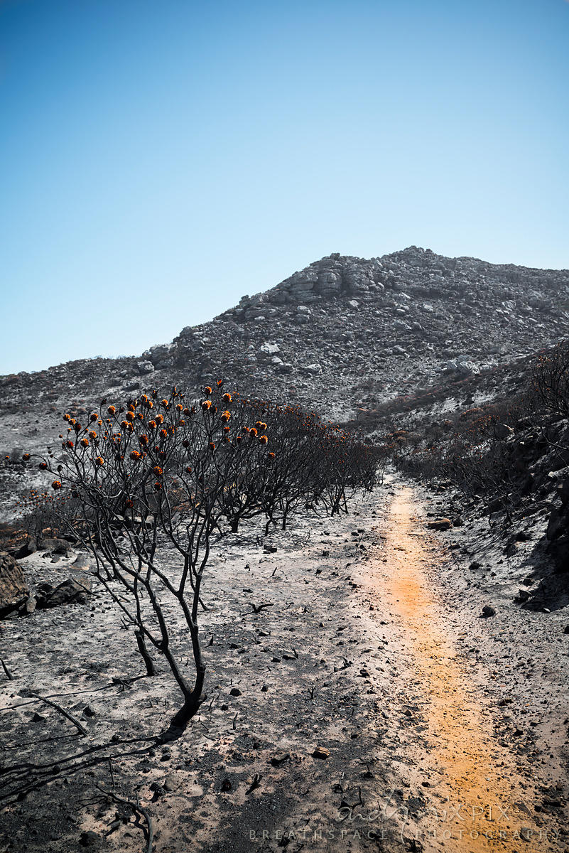 Silvermine after the fire