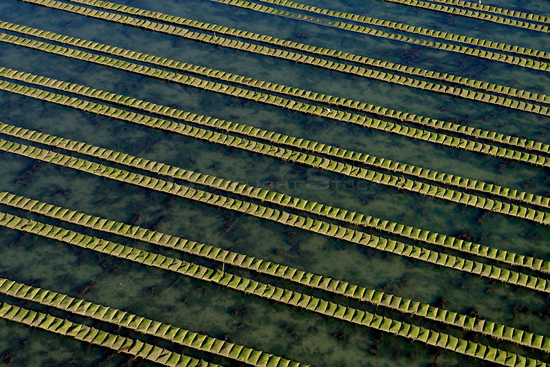 Rows of racks used in oyster farming at high tide, Isle de Re, Charente-Maritime, France, July 2017.