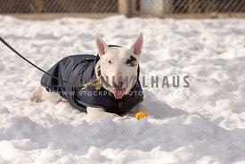 dog lying in snow with ball