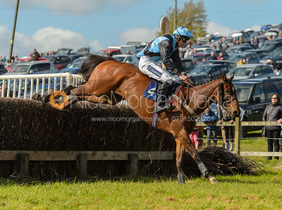 FESTIVAL BOUND (Rory Bevin) - Novice Riders - Woodland Pytchley at Dingley 15/4