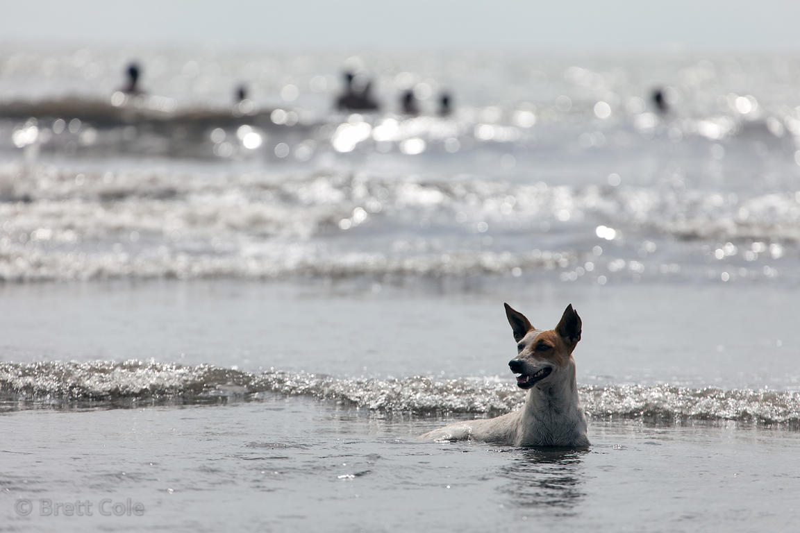 A stray dog plays in the Arabian Sea at Juhu Beach, Mumbai, India.