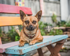 Dog laying on outdoor colourful wooden bench seat in garden