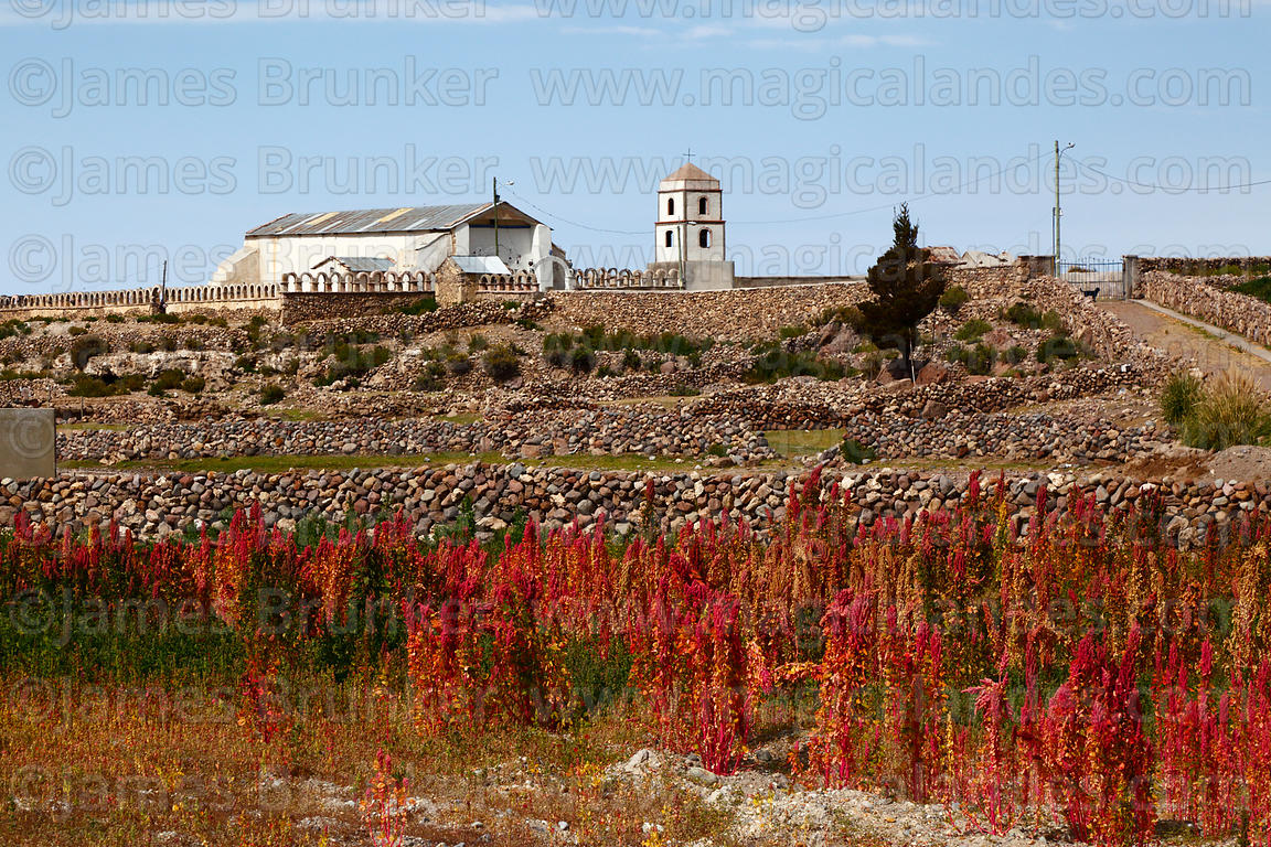 Quinoa field, San Juan Bautista / St John the Baptist church in background, Tahua, Bolivia