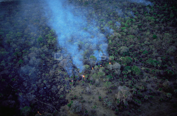 Aerial view of bush fire in woodland during dry season, Katavi National Park, Tanzania