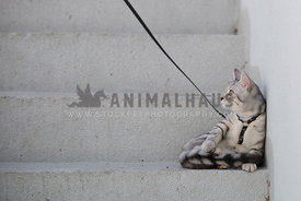 Cat resting on step wearing harness