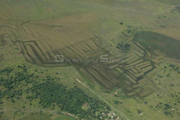 Aerial view of vestiges on the land of ancient agricultural works of primitive people, Beni floodplain, Beni Department, Boli...