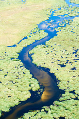 Aerial view of the Okavango delta, a channel with a sandy bed meanders through the swamp, Botswana, Africa