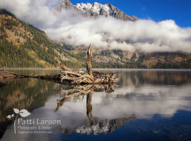 Natural Sculpture in Jenny Lake