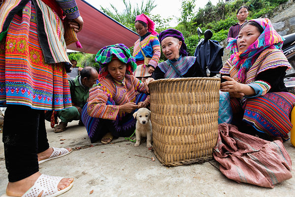 Flower Hmong Women Selling Puppies at Bac Ha Market