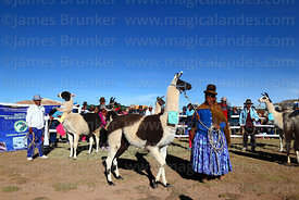 Aymara woman with her llama during competition, Curahuara de Carangas, Bolivia