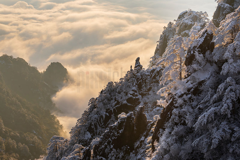 Snow-Covered Huangshan Pines above the Cloud Sea at Sunrise