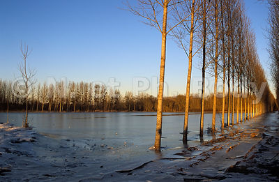 CHAMP GELE, INDRE ET LOIRE, FRANCE//FROZEN FIELD, INDRE ET LOIRE, FRANCE