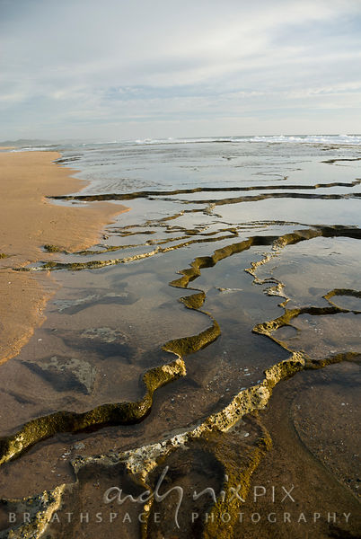 Sharp walls of dead coral form salt water pools along the sea shore.