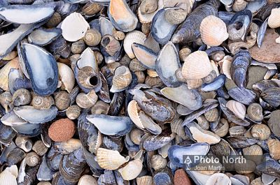 SEASHELLS 01B - Assorted seashells