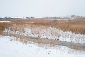 Cley NWT reserve covered in snow, Cley North Norfolk February