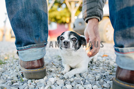 man reaching down to scratch black and white chihuahua