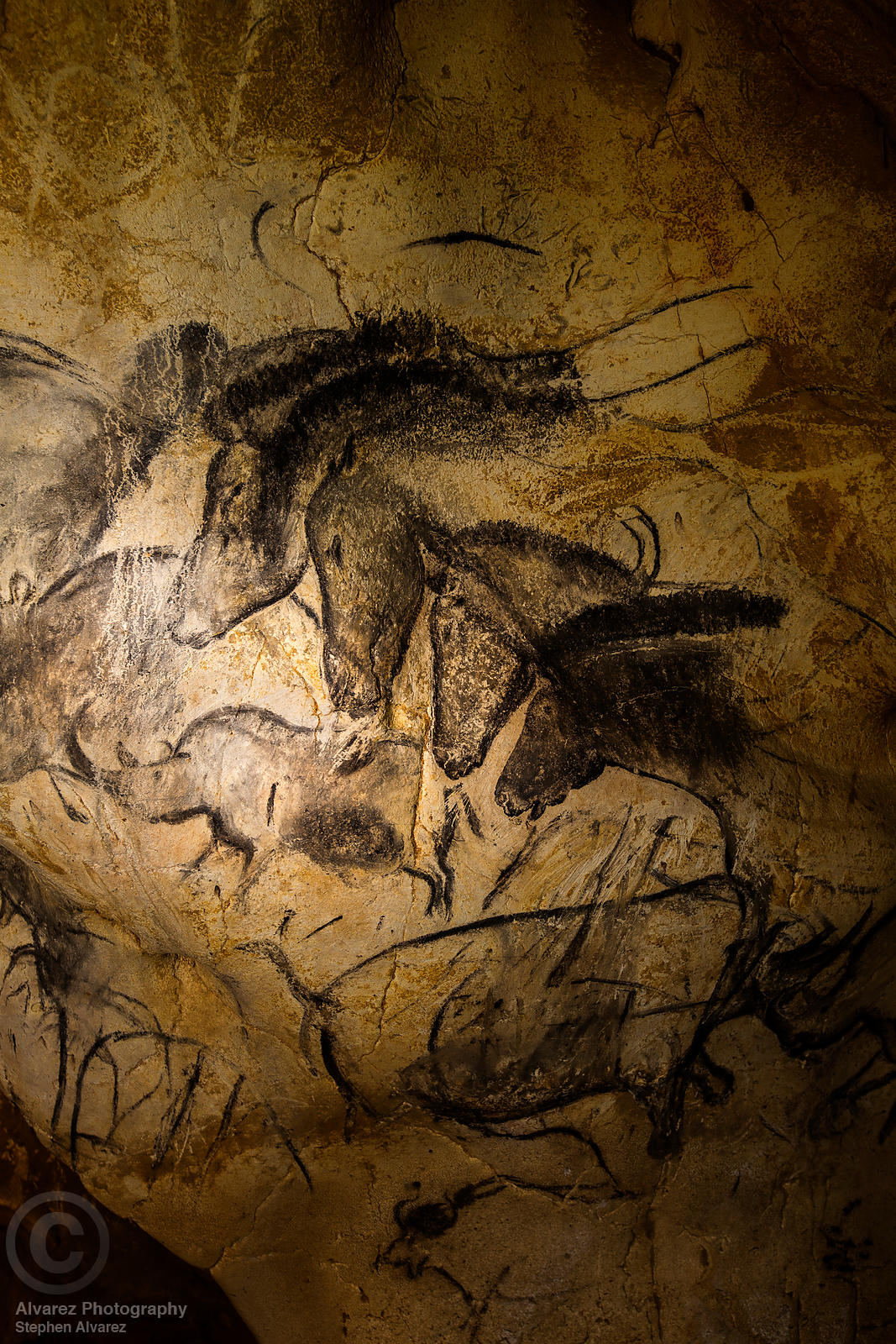 Four horses panel in Chauvet Cave, Ardeche France.