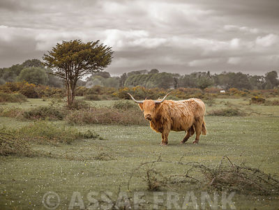 Cow in countryside