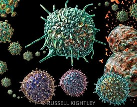 HIV and immune cells