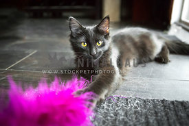 black kitten playing with feather toy