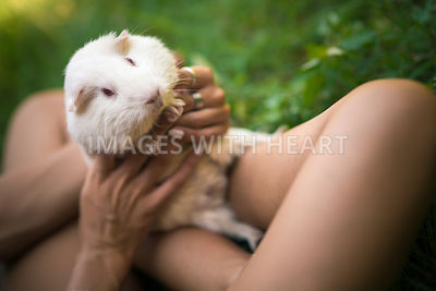 Guinea pig held by a girl