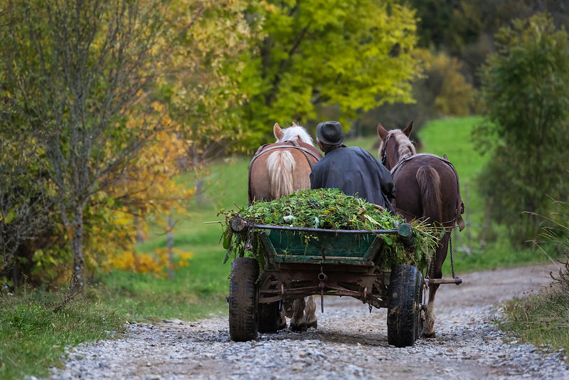 Horse Drawn Cart in the Maramures Region