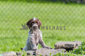 Little puppy standing with feet on a stone wall