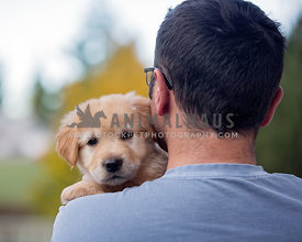 Young golden puppy in dad's arms