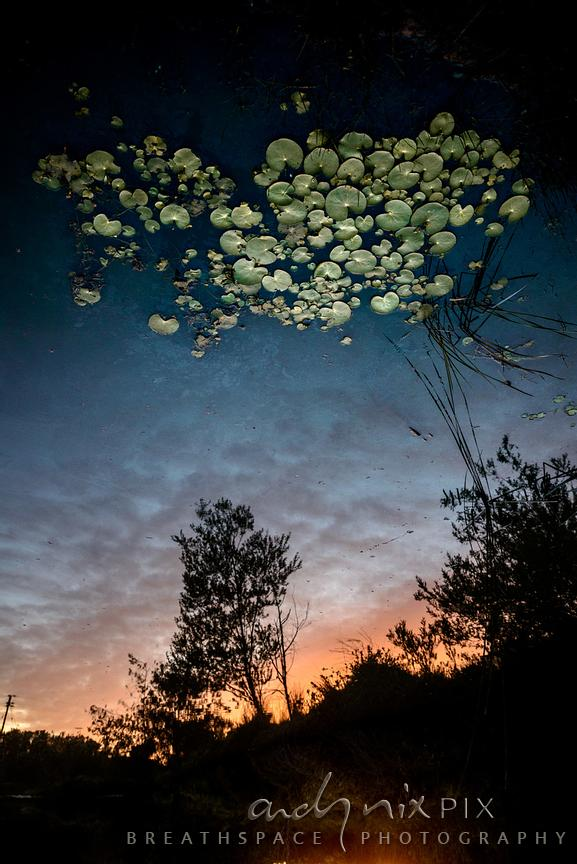Lily pads in the sky