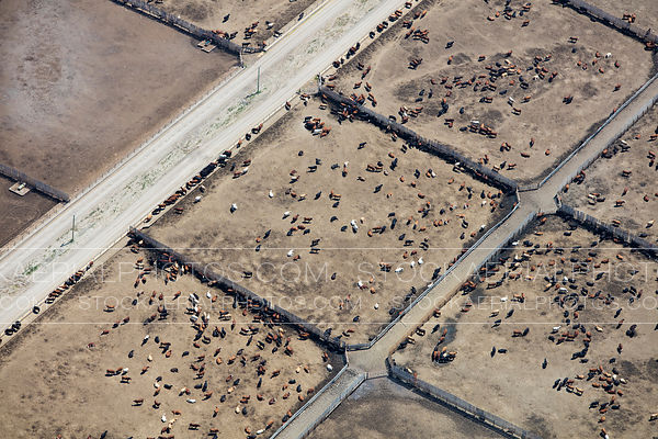 Western Feedlots, High River