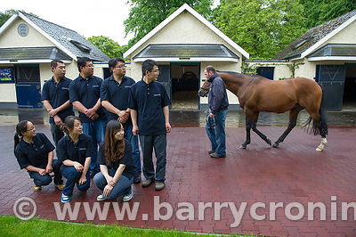 CoolmoreStud-10