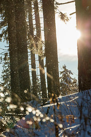 Germany, Baden-Wuerttemberg, Black forest, snow fall against the sun