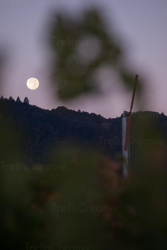 full moon with a vineyard fan