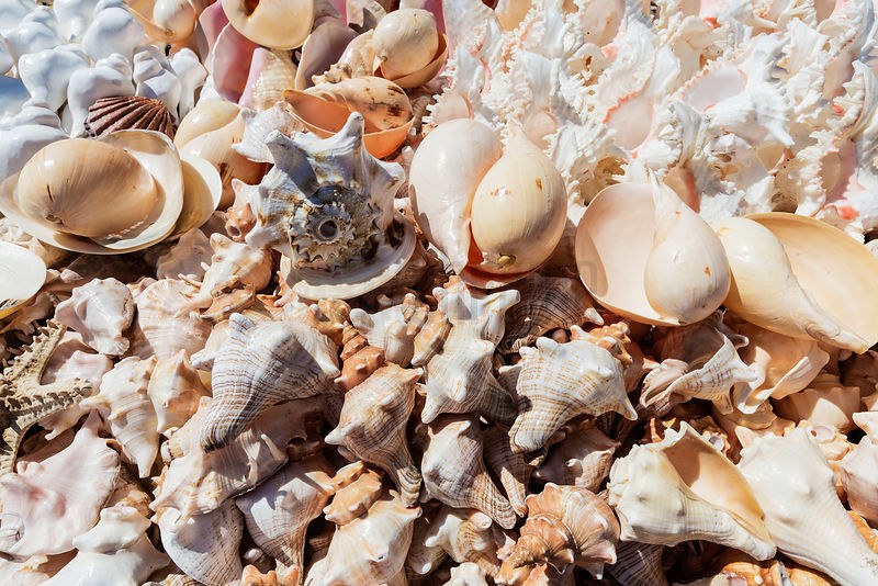 Shells for Sale at Marina Beach