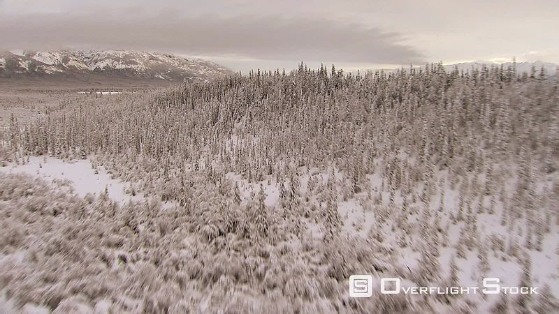 Flying over snowy forest and winding river in Alaska