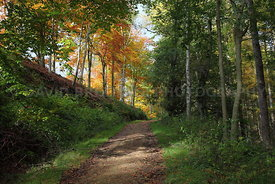 Autumn Forest in Thirsk, North Yorkshire
