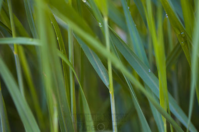 Macro Grass Abstract 1