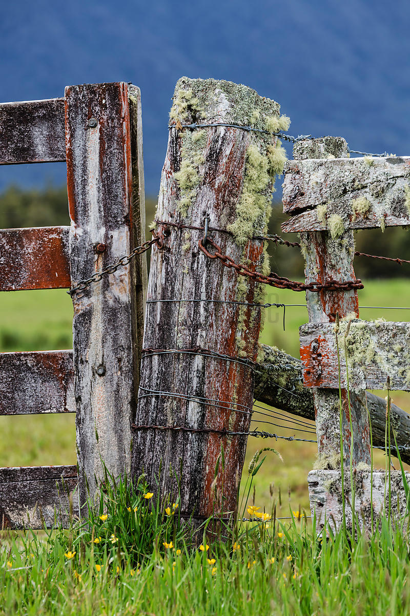 Lichen-Covered Fence and Gate