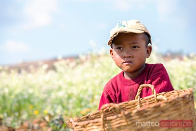 Young boy in a field, Shan state, Myanmar