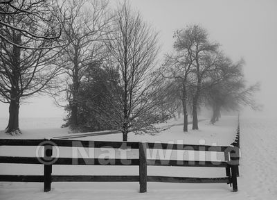 EMC-_Fence_in_Fog-7_January_18_2019_1_6400_sec_at_f_7.1