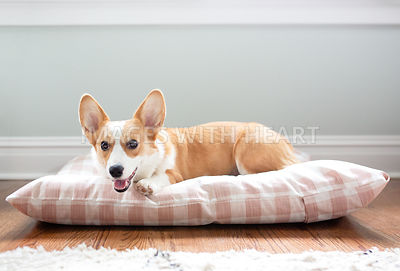 Corgi_laying_inside_dogbed
