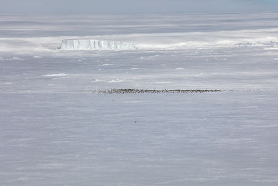 Aerial view of Emperor penguin (Aptenodytes forsteri) colony in distance, Gould Bay, Weddell Sea, Antarctica