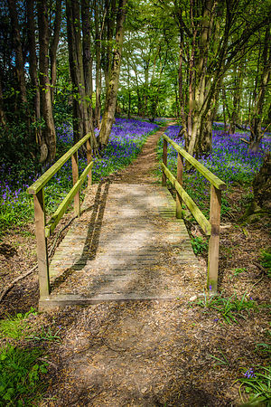 Bridge to Bluebells