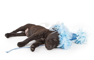 Sleeping puppy in a party hat