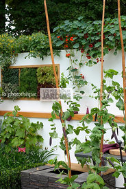 Allotment, garden designer, mangetout, Mini potager, Mini Vegetable garden, Small garden, Tropaeolum majus, Urban garden, Veg...