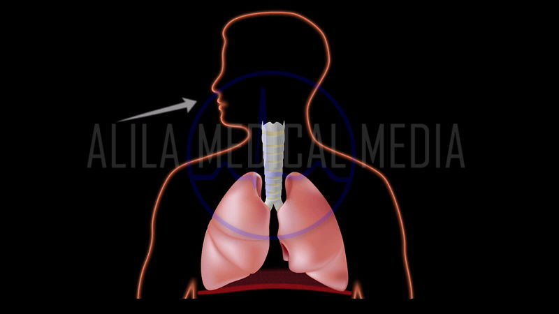 Breathing loop video with air flow indicated