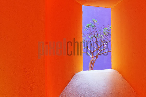 Orange Corridor Leading to a Tree