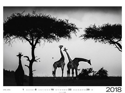 Calendrier_Wild_Africa_2018_Avril