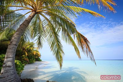 Tropical beach with palm, Maldives